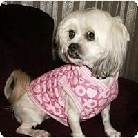 Adopt A Pet :: Reba - Mooy, AL