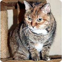 Adopt A Pet :: Lovey - Racine, WI