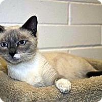 Adopt A Pet :: Velcro - New Port Richey, FL