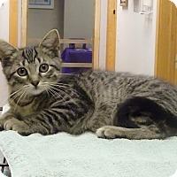 Adopt A Pet :: Rebel - Byron Center, MI
