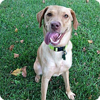 Adopt A Pet :: Abby - Lewisville, IN