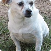 Adopt A Pet :: Mr. Peanut - Ball Ground, GA