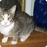 Adopt A Pet :: Toby - La Jolla, CA