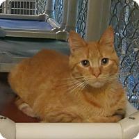 Adopt A Pet :: Gordo - Geneseo, IL