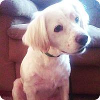 Adopt A Pet :: Bogey - Ogden, UT