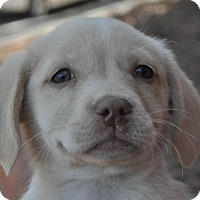 Adopt A Pet :: Kacey - Atlanta, GA