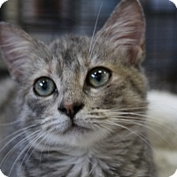 Adopt A Pet :: Aussie - Sarasota, FL