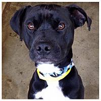 Adopt A Pet :: Rucker - Boston, MA