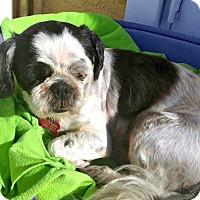 Adopt A Pet :: Lucy is very mellow! - Redondo Beach, CA