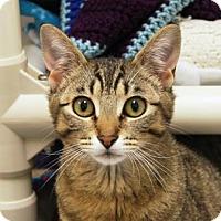 Adopt A Pet :: Ava - Bellevue, WA