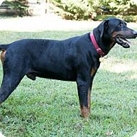 Adopt A Pet :: LOCHTE - Greensboro, NC
