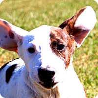 Adopt A Pet :: Herby~ meet me! - Glastonbury, CT