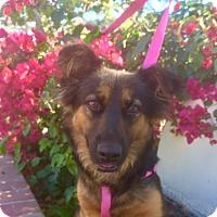 Adopt A Pet :: CHAI - Corona, CA