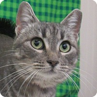 Adopt A Pet :: Deb - Lloydminster, AB