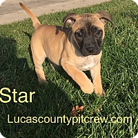 Adopt A Pet :: Star - Toledo, OH