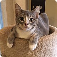 Adopt A Pet :: Ash - Chattanooga, TN