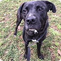 Adopt A Pet :: Hudson - Chico, CA