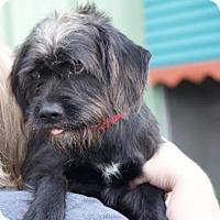 Adopt A Pet :: Hans - Columbus, GA