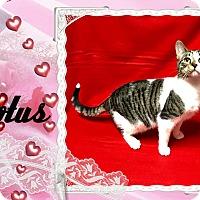 Adopt A Pet :: Lotus - Davison, MI