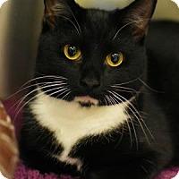 Adopt A Pet :: Cinderella - Aiken, SC