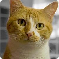 Adopt A Pet :: HALO (LO LO) - Houston, TX