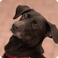 Adopt A Pet :: Elise (Has Application) - Washington, DC