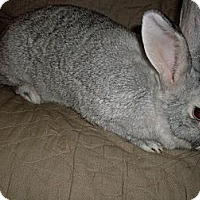 Adopt A Pet :: Ruby - Conshohocken, PA