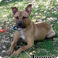Adopt A Pet :: Jesse - Cary, IL