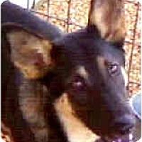 Adopt A Pet :: SUMMER - Wakefield, RI