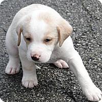Adopt A Pet :: Cody - Columbus, IN
