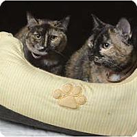 Adopt A Pet :: Jerri & Georgie(JF) - Little Falls, NJ