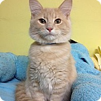 Adopt A Pet :: McGillicuddy - Byron Center, MI