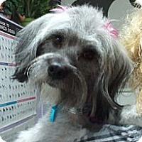 Adopt A Pet :: Charlize - Encinitas, CA