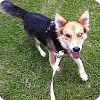 Adopt A Pet :: Bluebelle - Richmond, VA