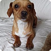 Adopt A Pet :: Keta - Hollis, ME