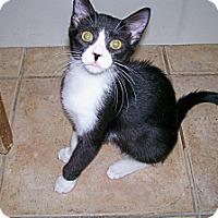 Adopt A Pet :: Truffles - Scottsdale, AZ