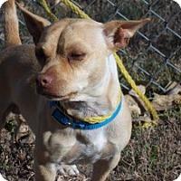 Adopt A Pet :: Yogi - Greeley, CO