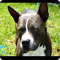 Adopt A Pet :: Yanko - Miami, FL