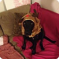 Adopt A Pet :: Rufus - Baden, PA