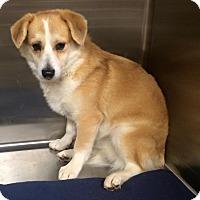 Adopt A Pet :: Russell - Oak Ridge, NJ