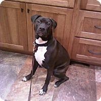 Adopt A Pet :: Izzy - Davison, MI