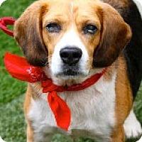 Adopt A Pet :: Birdie - Miami, FL