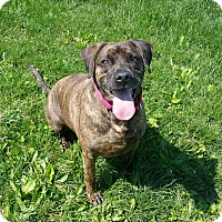 Adopt A Pet :: Baca- Sponsored!! - Lisbon, OH