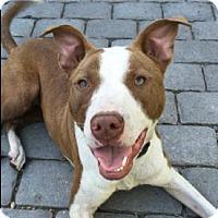 Adopt A Pet :: Sydney - Sunnyvale, CA