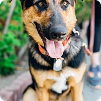 Adopt A Pet :: Zazu - Los Angeles, CA
