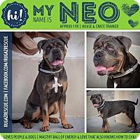 Adopt A Pet :: Neo - New Port Richey, FL