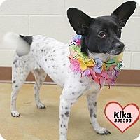 Adopt A Pet :: 399598 Kika - San Antonio, TX