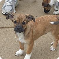 Adopt A Pet :: Waldo & Walter - Memphis, MI