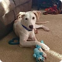 Adopt A Pet :: Rafe - DeForest, WI