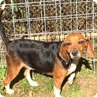 Adopt A Pet :: Lola - Dumfries, VA